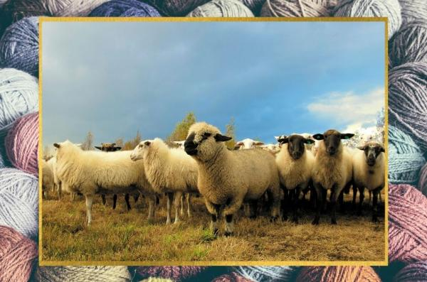 Types of Wool   Know what you are wearing